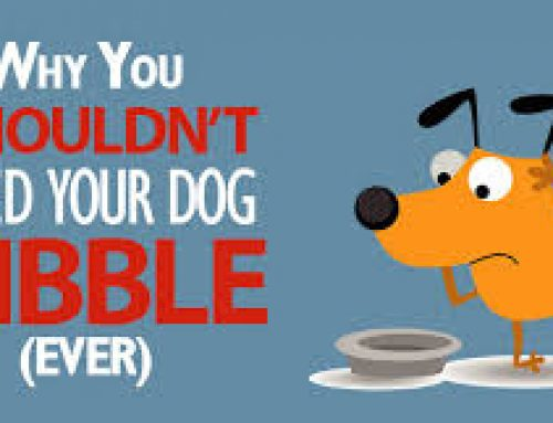 Is kibble (dry dog food) good for your dog